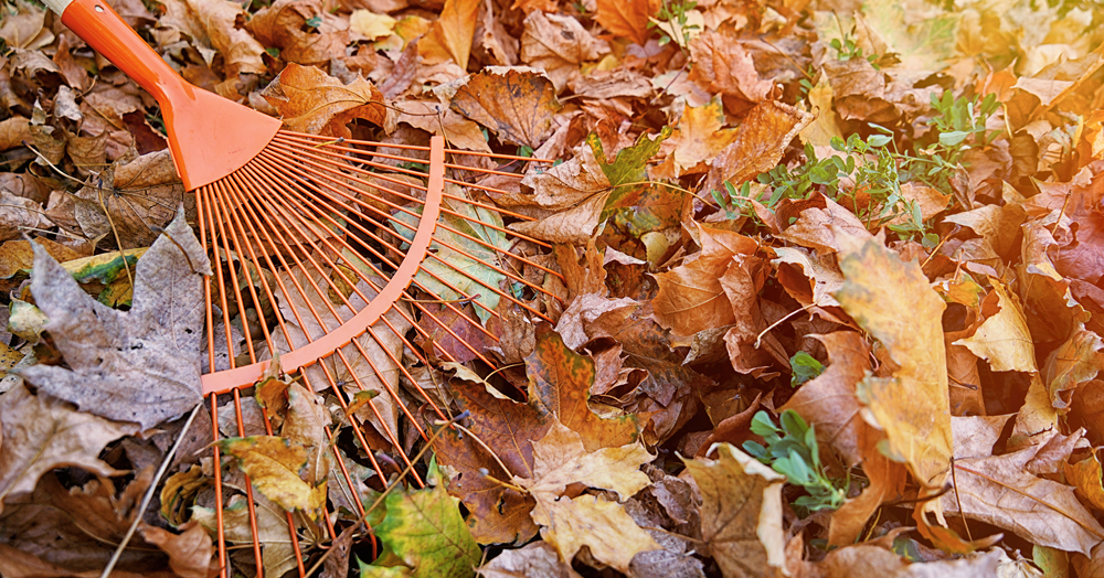An orange rake raking up autumn leaves